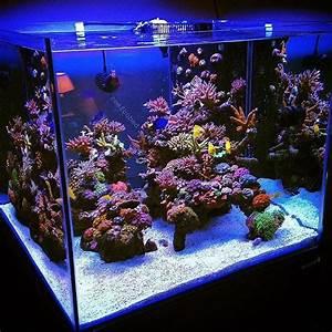 Optimale Aquarium Temperatur : 20 best ideas about reef aquarium on pinterest marine tank marine fish and underwater life ~ Yasmunasinghe.com Haus und Dekorationen