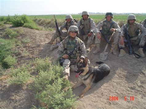 Military K9 Dogs Attack