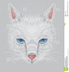 Face Of A White Cat With Expressive Blue Eyes Royalty Free ...