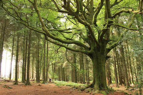 what does chambre in la forêt de brocéliande la haute forêt