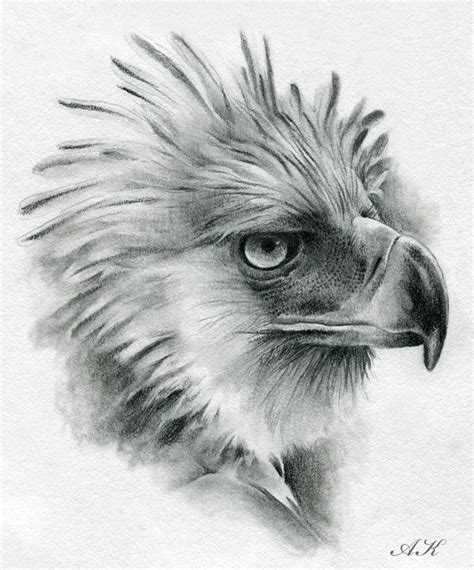 draw eagles   draw philippine eagle