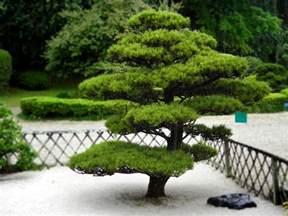 Arbuste De Jardin Decoratif by Arbuste Pour Jardin Photos De Magnolisafleur