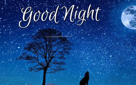 Good Night Images Wallpapers And Pictures Free Download