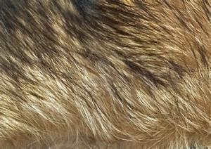 Wolf Fur | Animal Textures | Pinterest