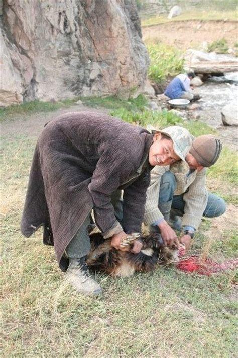 chinese woman killing  goat goat skinning  gatagani youtube qurbani beautifu girls
