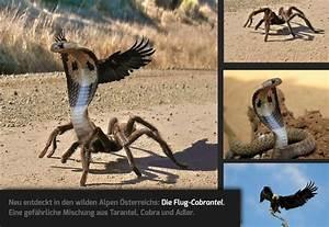 Mehrere Bilder In Einem : erschafft ein fantasie gesch pf aus mehreren tieren ~ Watch28wear.com Haus und Dekorationen