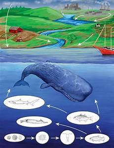 Oceanic Food Web: Decomposers