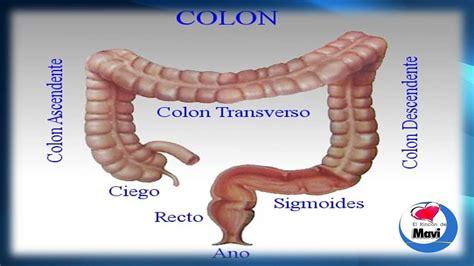 Remedios caseros y naturales para el sindrome del colon ...