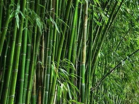 utiliser le bambou dans la d 233 coration ext 233 rieure