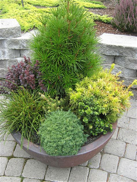 tips for planting trees and shrubs in containers trees