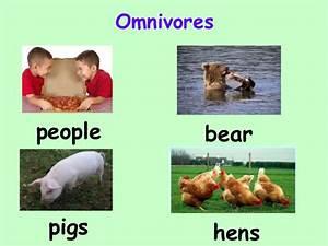 ANIMAL'S: Omnivores