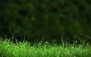 Green grass wallpaper hd | HD Wallpapers