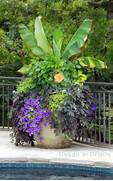 Container Garden Blue Wave Pots For Around The Pool The Great Outdoors Pinterest Landscaping Your Pool With The Best Potted Plants Clever Idea Conceal An Ugly Pool Deck With Rows Of Potted Plants