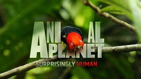 Animal Planet Wallpaper Free - animal planet wallpaper 65 images
