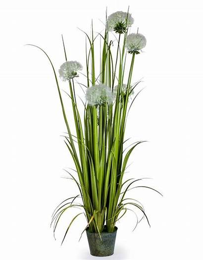 Grasses Ornamental Pot Galvanised Tall Garden Brand