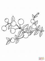 Cranberry Coloring Pages Cranberries Clipart Fruits Drawing Printable Print Draw Berries Supercoloring Super Paper Categories Recommended sketch template