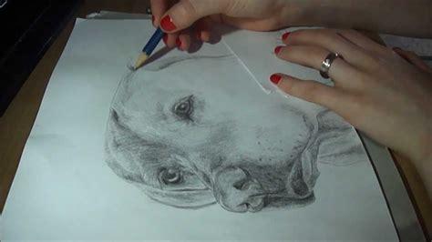 pencil drawing labrador speed draw josymovies youtube