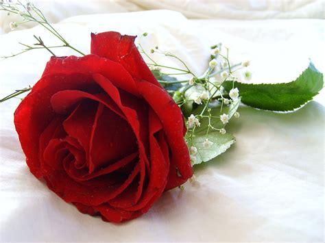 Fresh Photo Hd by Flower Wallpaper Beautiful Flowers 2380 Hd