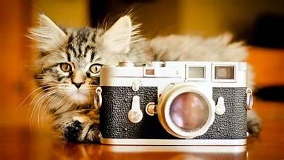 Funny Cat Desktop Wallpapers Camera Widescreen