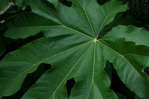 green foliage outdoor plants large green leaf outdoor plants garden inspiration