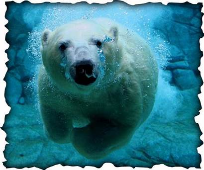 Bear Polar Mechanisms Defense