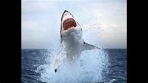 Der Weiße Hai Zeichentrick YouTube