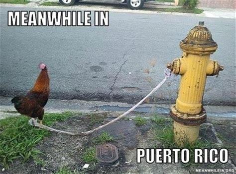 Puerto Rico Memes - 25 best ideas about puerto rico memes on pinterest memes boricuas lmfao and lol