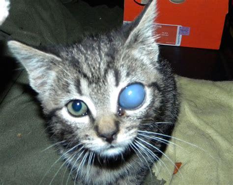 kitten eyed cat kittens stray coff had