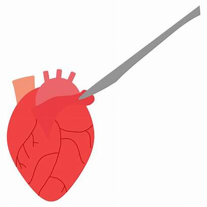 Heart Clipart Muscles Collaborate Snhs Transparent Clip