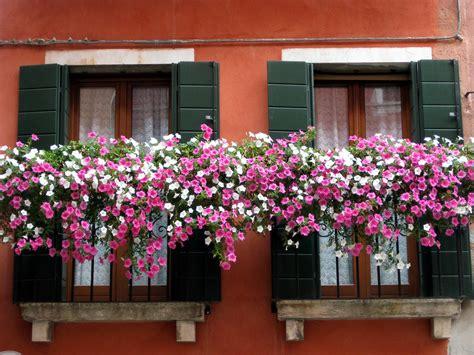 terrazzi in fiore venezia terrazzi in fiore venice flowers alberto