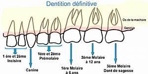 Douleurs Dents De Sagesse : extraction des dents de sagesse la clinique david c t dr david c t ~ Maxctalentgroup.com Avis de Voitures