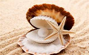 Seashells starfish pearl sand beaches shell clam wallpaper ...