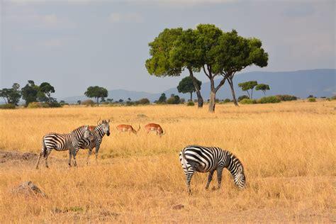 Masai Mara Fly In Safari Package