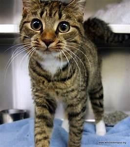Brown tabby cat | Animals in Harmony | Pinterest