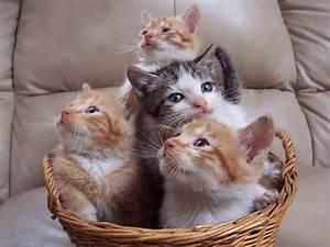 Unique Wallpaper: Funny Cats