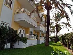 palm garden appartments puerto de alcudia mallorca With katzennetz balkon mit alcudia palm garden