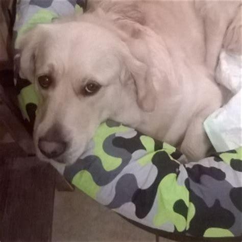 canapé cabb comment faire un panier pour chien et