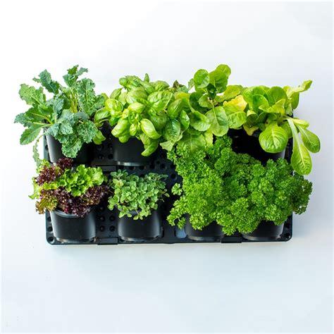 Greenwall Vertical Garden Kit by Holman Vertical Greenwall Garden Kit Bunnings Warehouse