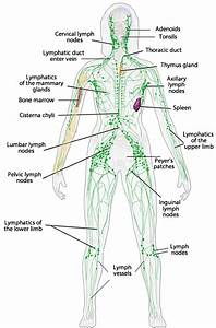 Human Anatomy For Health  U0026 Wellness Unit Plan