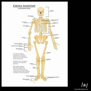 Human Anatomy Study Guide