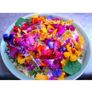 les fleurs comestibles en cuisine cuisiner avec les fleurs tambouille tout