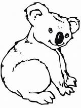 Coloring Pages Koala Bear Printable Animal Colouring Realistic Visit sketch template