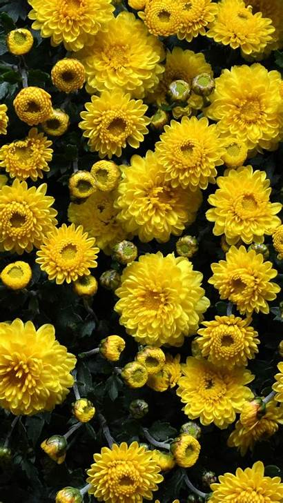 Yellow Iphone Flowers 4k Wallpapers Floral Backgrounds