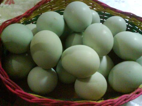 telur bebek penambah vitalitas pria