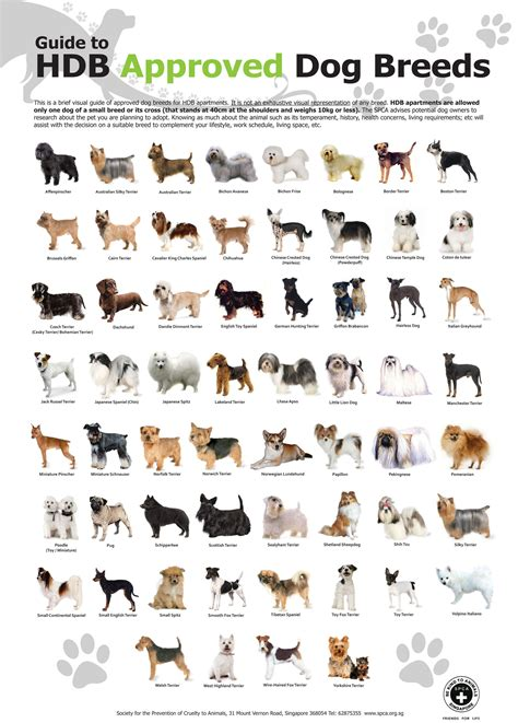 guide  hdb approved dog breeds  singapore ivan teh