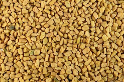 Filefenugreek Seeds