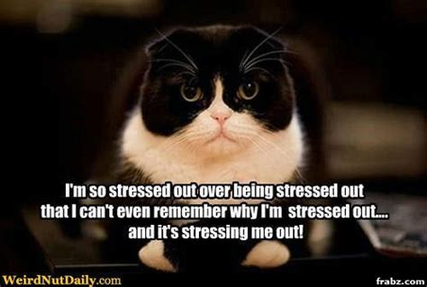 Stress Meme - the pa journey a canadian perspective stress