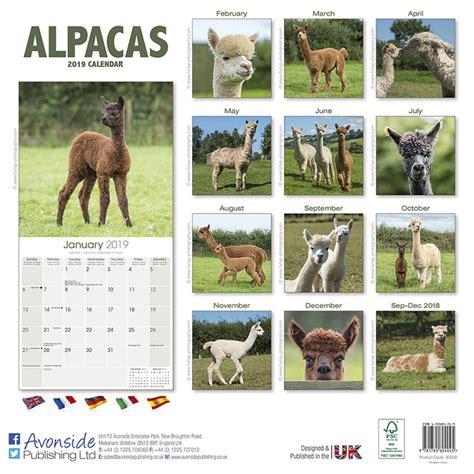alpacas calendars ukposterseuroposters