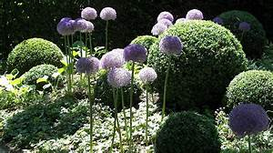Blühende Pflanzen Winterhart : schattenpflanzen winterhart f r den garten beispiele ~ Michelbontemps.com Haus und Dekorationen