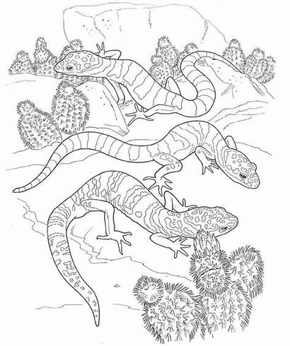 Coloring Desert Pages Animals Printable Gecko Animal